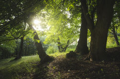 Natural green forest in summer Stock Photos