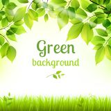 Natural green fresh foliage background. Natural green fresh spring leaves and grass botanic foliage decorative background poster print vector illustration Royalty Free Stock Photos