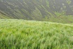 Natural green grass Stock Photo
