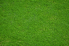 Natural green grass Royalty Free Stock Photo