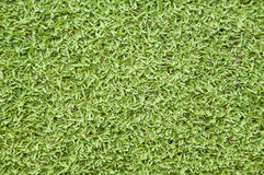 Natural green grass. Stock Photo