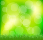 Natural green grass background Royalty Free Stock Photography