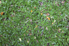 Natural Green Grass Background Texture. Stock Photo