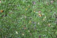 Natural Green  Grass Background Texture. Natural Green Grass Background Texture Stock Photo
