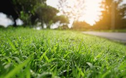 Green grass background texture. Natural green grass background texture and have light of sunshine Royalty Free Stock Image