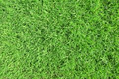 Green grass background texture. Natural green grass background texture at an slight angle Royalty Free Stock Images
