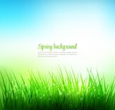 Natural green grass background Royalty Free Stock Photo