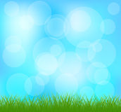 Natural green grass and blue background Stock Image