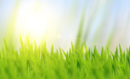 Natural green grass Stock Images