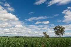 Natural Green Grass Field with Blue Sky and White Cloud. On Countryside of Thailand as Summer time Weather Royalty Free Stock Images