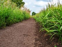 Natural green grass field in sunny day with dirt road pathway. Low vision, beautiful perspective Royalty Free Stock Photography