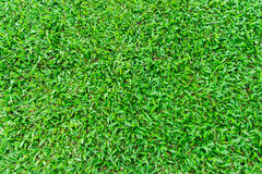 Natural Green Grass in the Garden Stock Photos