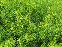 Natural Green Grass Pattern In Spring Stock Photos