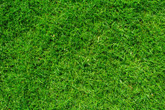 Natural green grass texture, top view of the lawn, golf green wa Royalty Free Stock Images