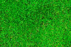 Natural green grass in the top view. royalty free stock images