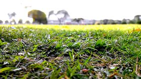 Beautiful natural green ground grass photography. stock image