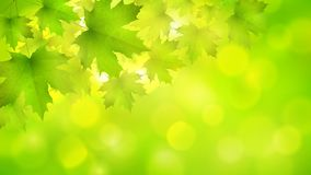 Natural green horizontal rectangular background with maple leaves and tree branches. Vector summer spring background royalty free illustration