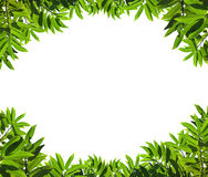 Natural green leaf frame. On white background Royalty Free Stock Image