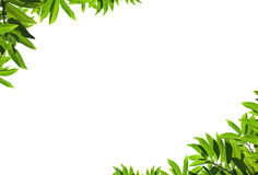 Natural green leaf frame Stock Photos