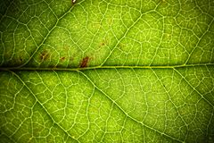 Natural green leaf fresh detailed rugged surface structure extreme macro closeup photo background stock image