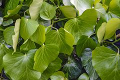 The foliage of the spring bush. Blank for design stock photos