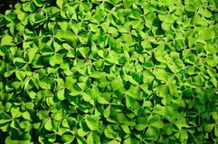 Natural green leaf texture Stock Photos