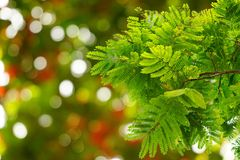 Natural green leaves with blur bokeh spring or summer background Stock Photos