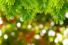 Natural green leaves with blur bokeh spring or summer background Stock Photo
