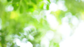 Natural green leaves with blurred effect stock footage