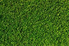 Natural green leaves wall Stock Photos