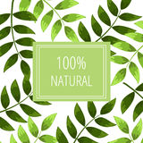 100% natural. Green leaves on a white backdrop with a card 100% Natural vector illustration