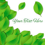 Natural green lettering sticker Stock Image