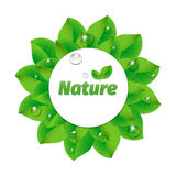 Natural green lettering sticker Royalty Free Stock Photography
