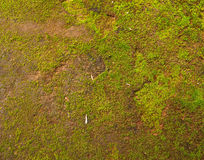 Natural green moss background Royalty Free Stock Photography