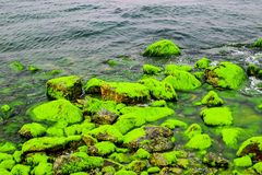 Natural green moss at beach rock with blue sea at Ly Son island, vietnam Stock Photos