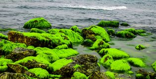 Natural green moss at beach rock with blue sea at Ly Son island, vietnam. Stock Photo