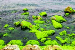 Natural green moss at beach rock with blue sea at Ly Son island, vietnam. Stock Photography