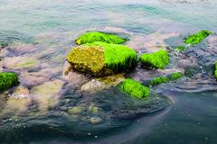 Natural green moss at beach rock with blue sea at Ly Son island, vietnam Royalty Free Stock Image