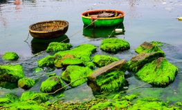 Natural green moss at beach rock with blue sea at Ly Son island, vietnam. Stock Photos