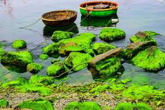 Natural green moss at beach rock with blue sea at Ly Son island, vietnam Stock Photography