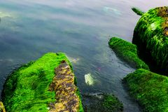 Natural green moss at beach rock with blue sea at Ly Son island, vietnam Stock Image