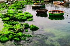 Natural green moss at beach rock with blue sea at Ly Son island, vietnam. Royalty Free Stock Image
