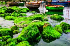 Natural green moss at beach rock with blue sea at Ly Son island, vietnam. Royalty Free Stock Photography