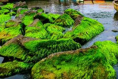 Natural green moss at beach rock with blue sea at Ly Son island, vietnam. Stock Image