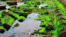 Natural green moss at beach rock with blue sea at Ly Son island, vietnam. Stock Images
