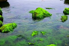 Natural green moss at beach rock with blue sea at Ly Son island, vietnam. Royalty Free Stock Photo