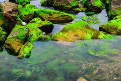 Natural green moss at beach rock with blue sea at Ly Son island, vietnam Stock Photo