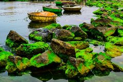 Natural green moss at beach rock with blue sea at Ly Son island, vietnam. Royalty Free Stock Photos