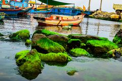 Natural green moss at beach rock with blue sea at Ly Son island, vietnam Royalty Free Stock Images