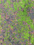 Natural green moss on red rock brick Royalty Free Stock Photography